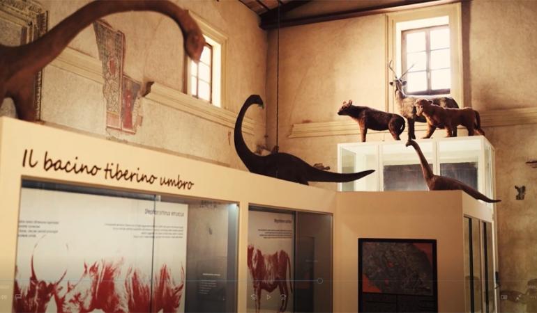 Paleolab - Museo delle raccolte paleontologiche dell'Umbria meridionale (Ex Chiesa di San Tommaso)