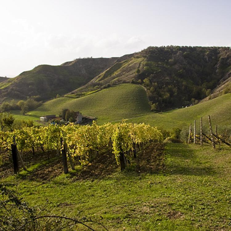 La Strada dei vini etrusco romana