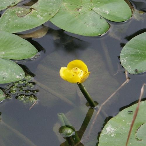 La flora e la fauna del lago di Piediluco